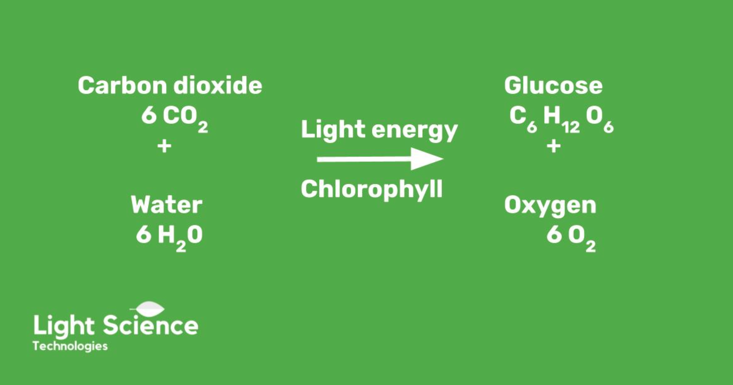 Photosynthesis in numbers