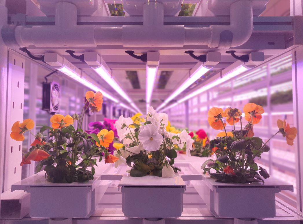 Vertical farming: 15 ways to reduce your costs