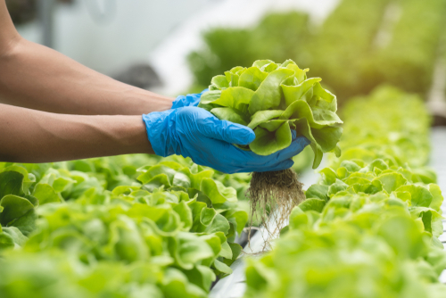 What is the difference between hydroponics, aquaponics and aeroponics?