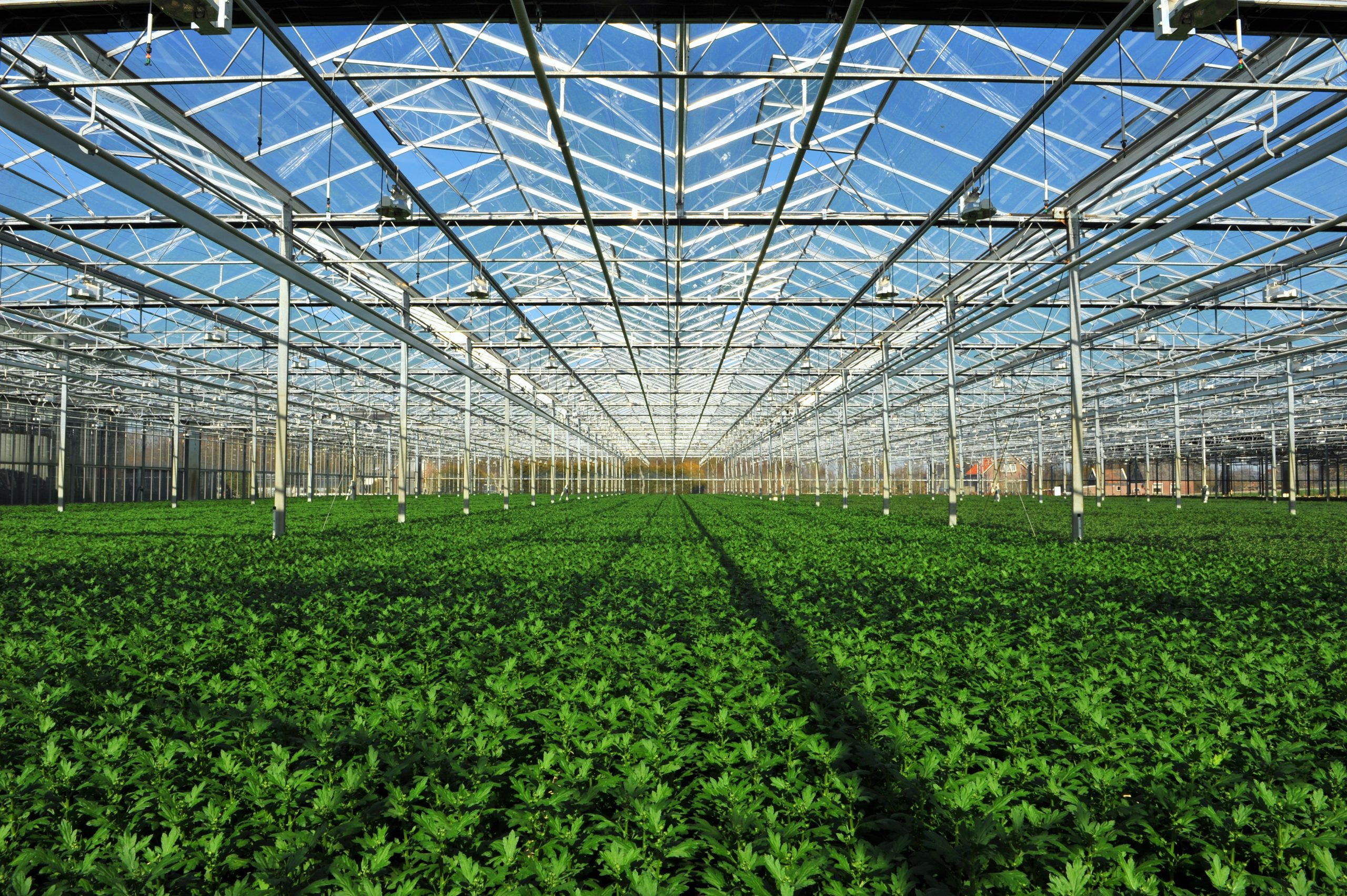 Greenhouse Lighting Design: An Essential Guide